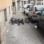 Salerno: degrado in via San Giovanni Bosco, strada invasa dai piccioni